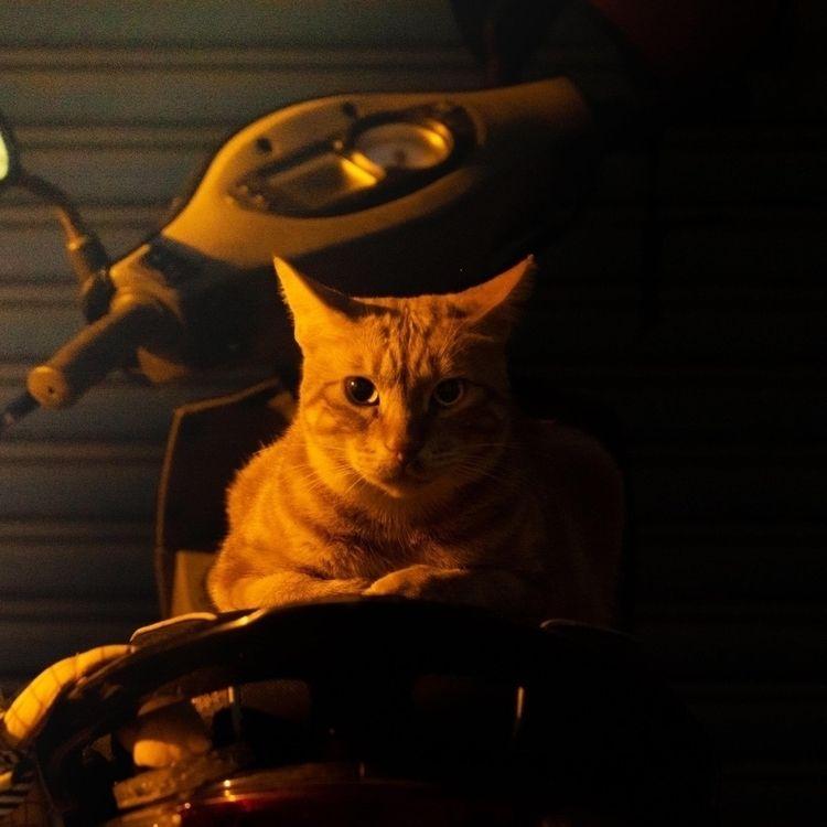 Street cat - ponchao | ello