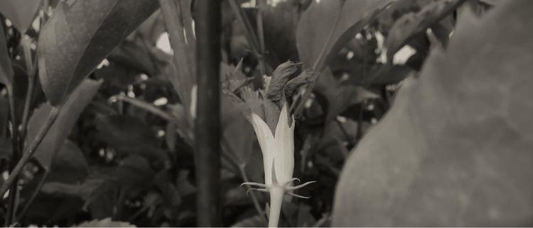 Flower ready bloom evening Apps - mikefl99 | ello