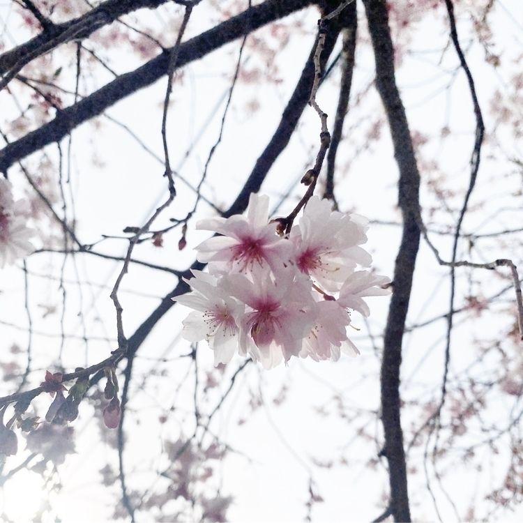 Spring Isolation - spring, flowers - nightcrawler   ello
