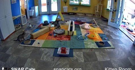 SNAP Cats Published darryl@snap - snapcats | ello