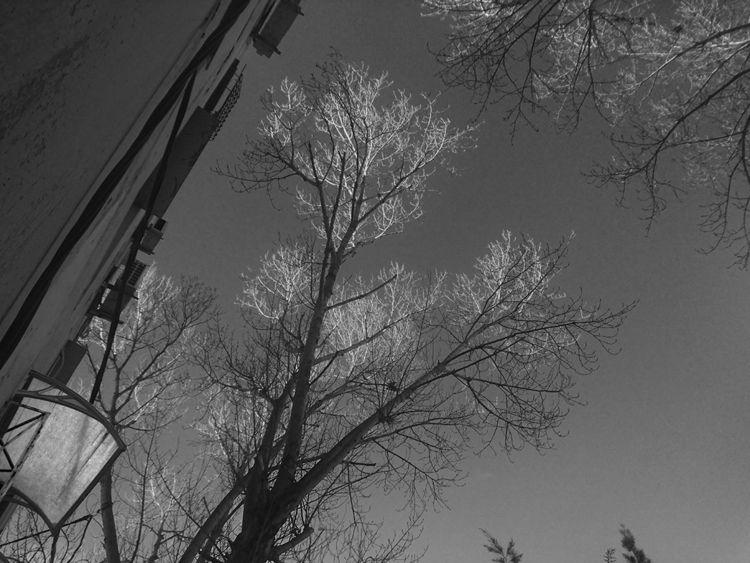 Quand le crépuscule - algeriecapitalealger - abderrahmanedjelfaoui | ello