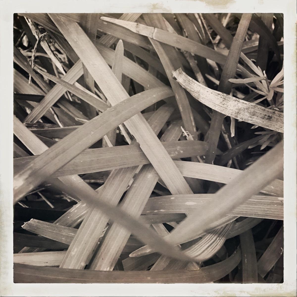 Grass blades weaving Apps - mikefl99 - mikefl99 | ello
