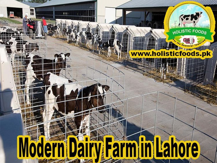 dairy business grows Pakistan r - holisticfoods19 | ello