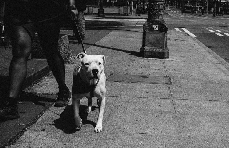 fujifilm, street, dog - ryanmckinney | ello