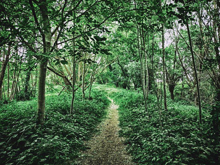 pathway - studio_zamenhof | ello