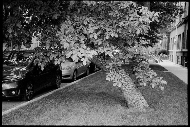 Untitled - 2020 - 35mm, NikonFE - brotherly_dove | ello