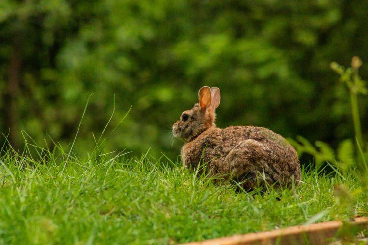 Rabbit 2020 05 23 03 Stansberry - davidseibold | ello