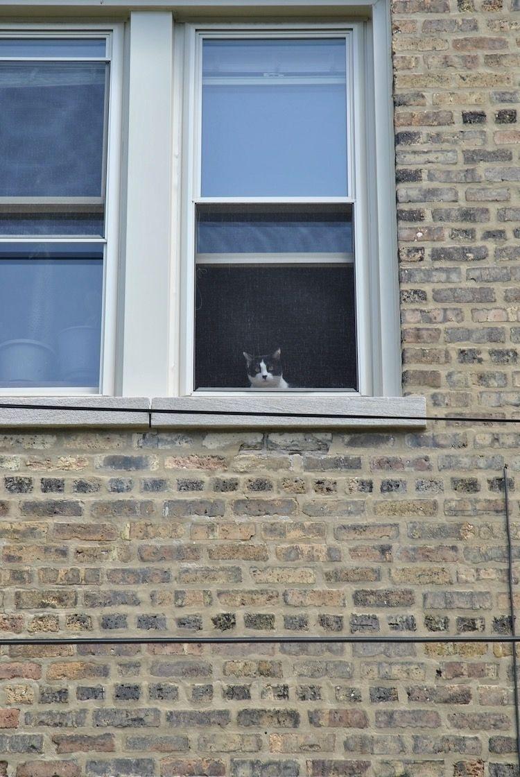 Cat watching work backyard - photostatguy   ello