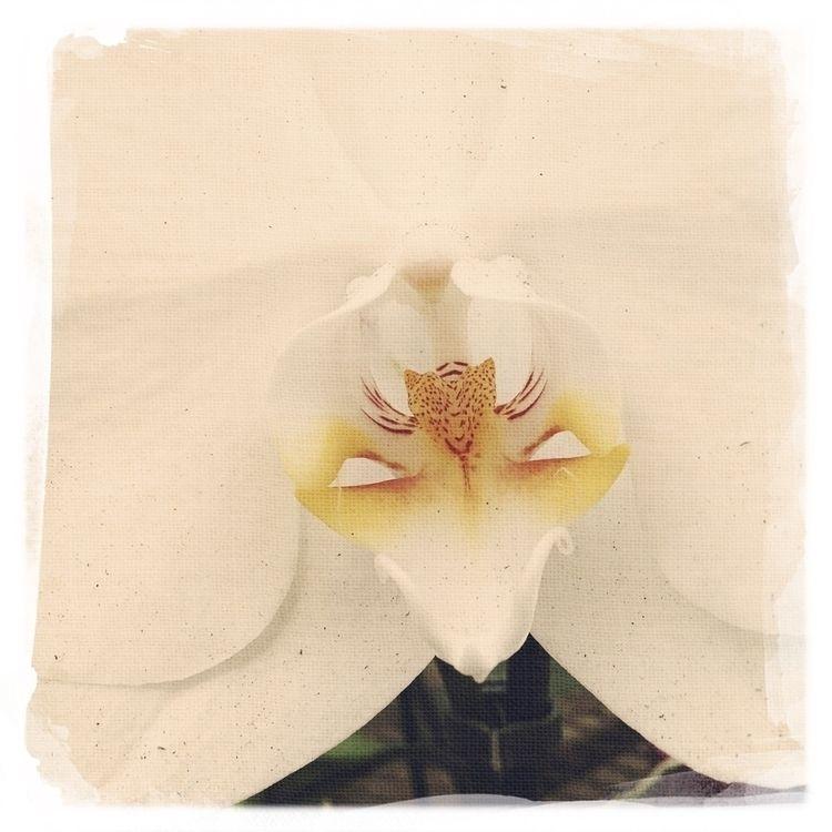 Rain drops pedals white orchid  - mikefl99   ello