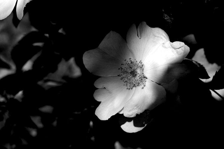 Botanical Monochrome 8913 - flowerphotography - dorian-stretton | ello