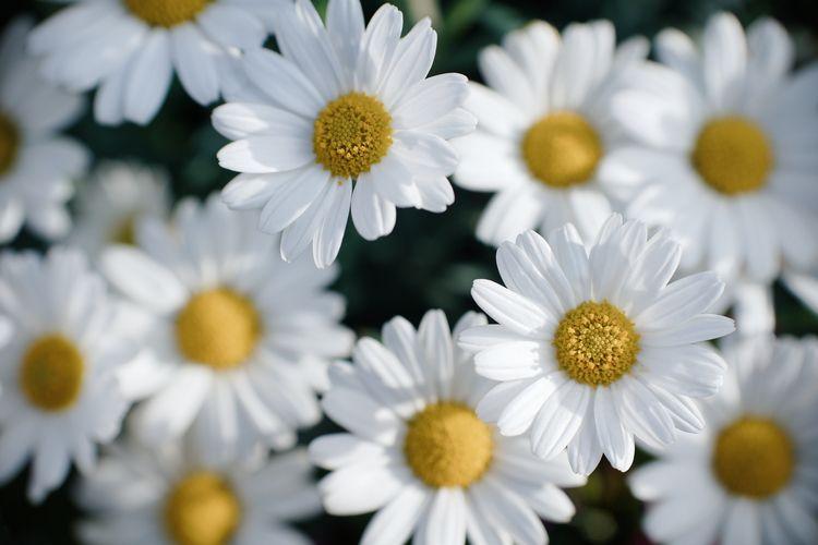 Flowerskin - photography, bokeh - marcushammerschmitt | ello