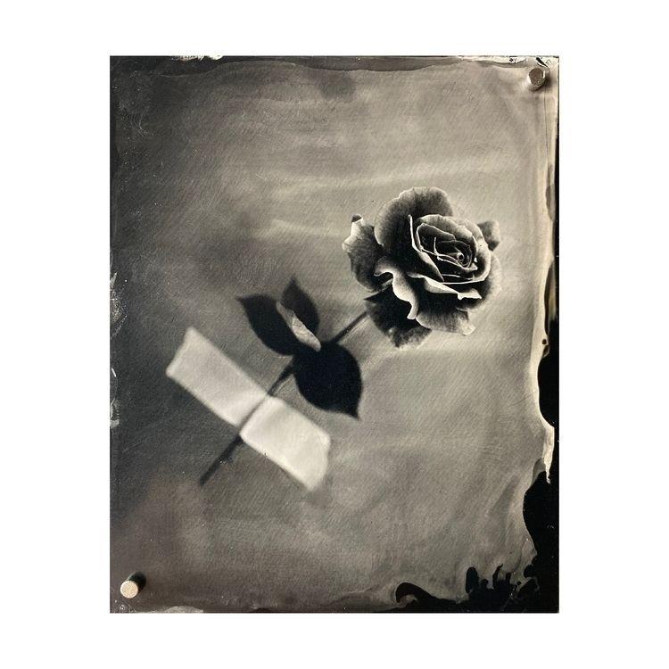 rose backyard Wet Plate Collodi - luismaduarte | ello
