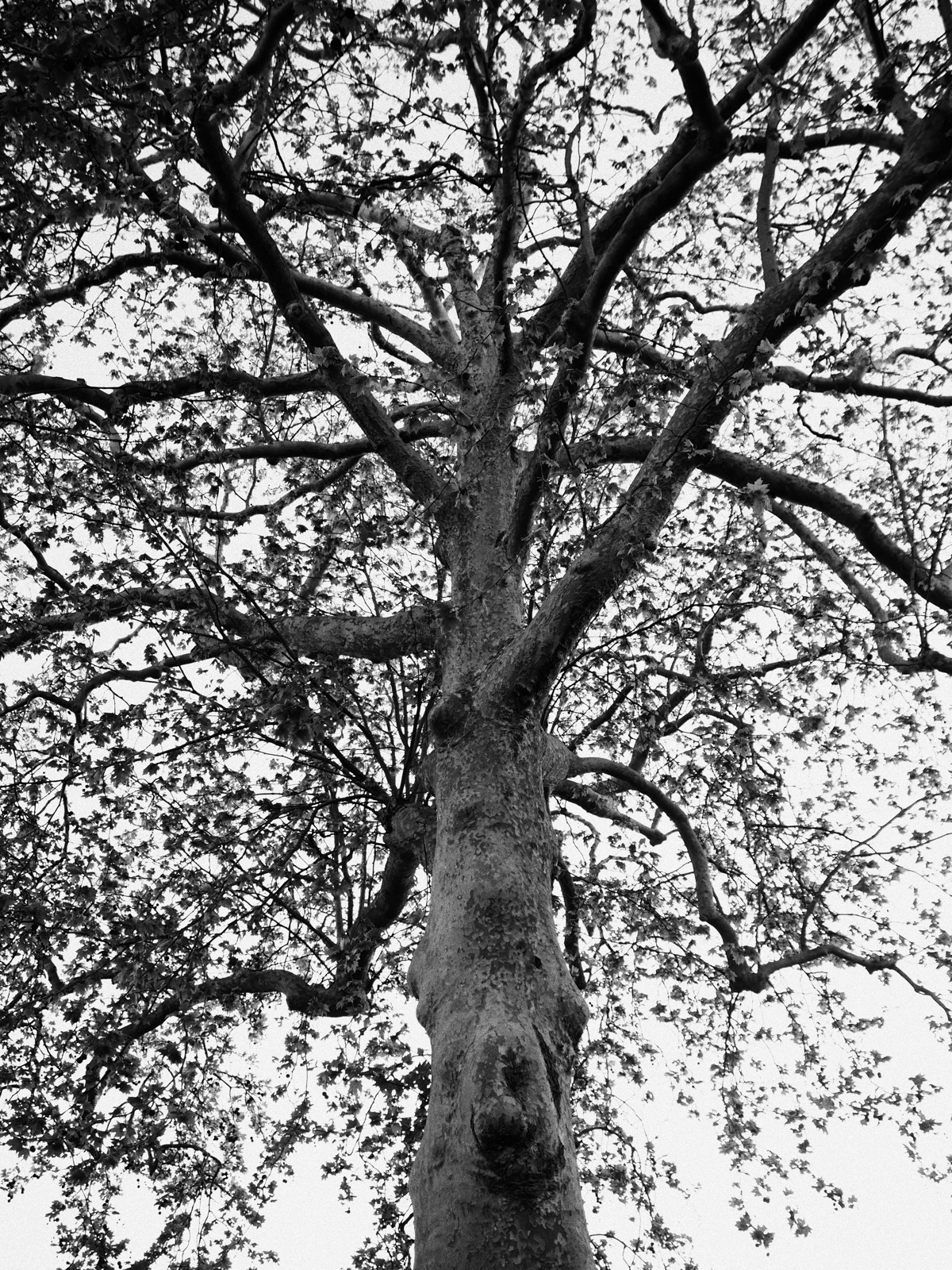 Tree love tree. arrangement bra - skazman | ello