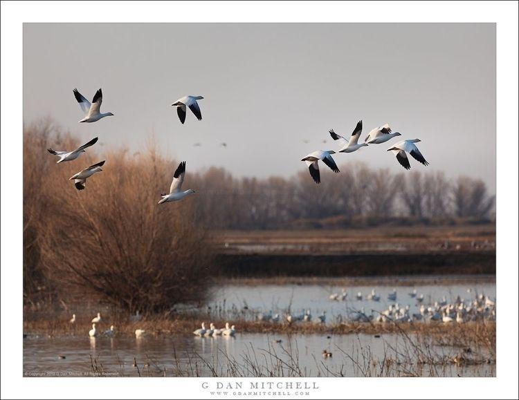 Air. Copyright 2012 Dan Mitchel - gdanmitchell | ello