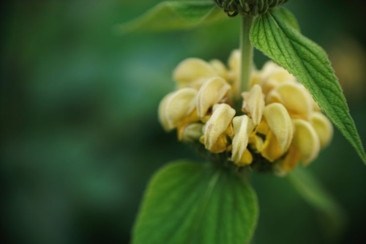 Plateau - photography, macro, flower - marcushammerschmitt   ello