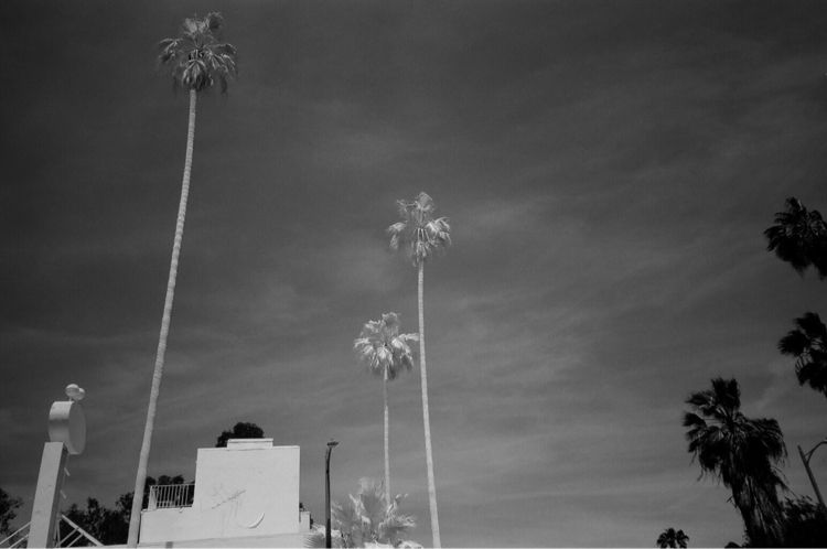Sunset Blvd Film - kirkobeeoed | ello