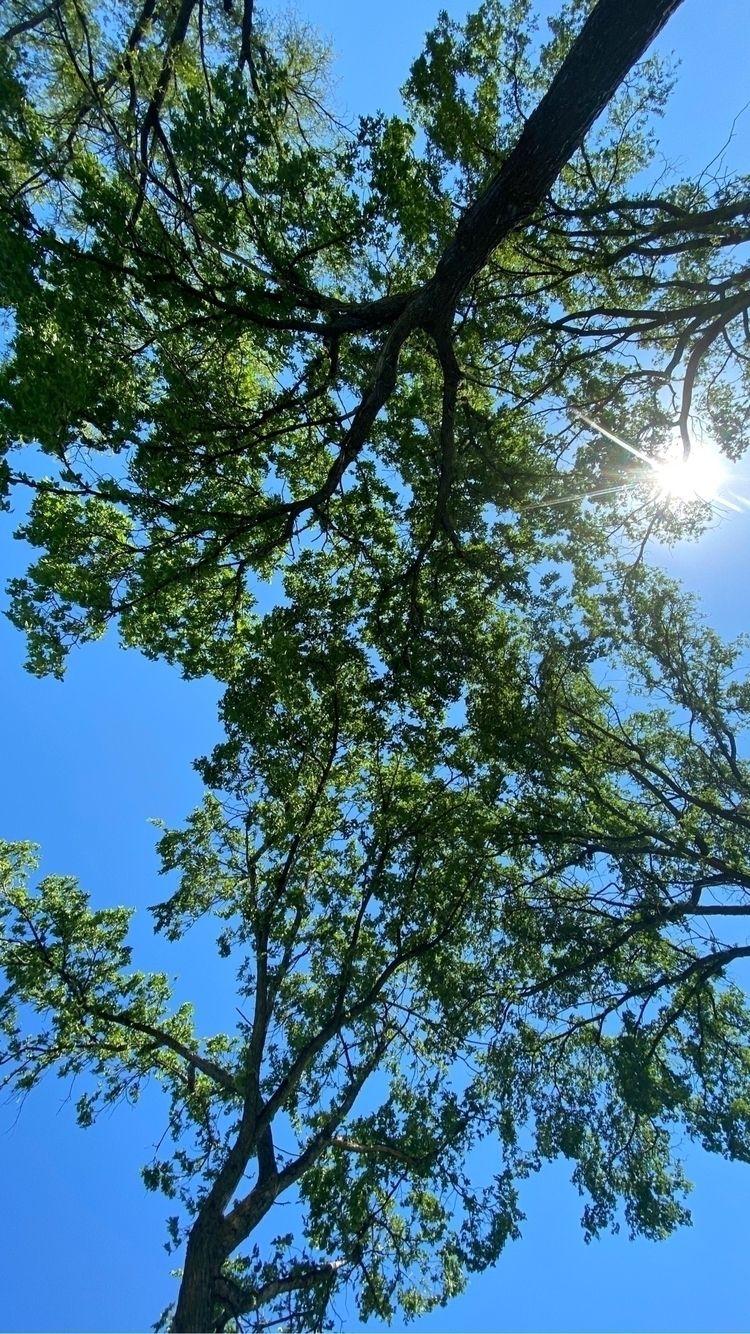Tree tops hot day - cenquist | ello