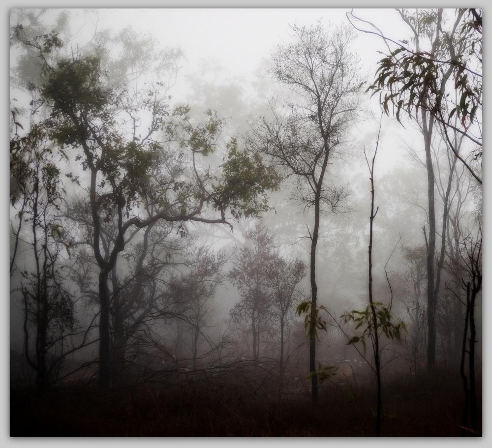 sea fog - landscape, forest - voiceofsf | ello