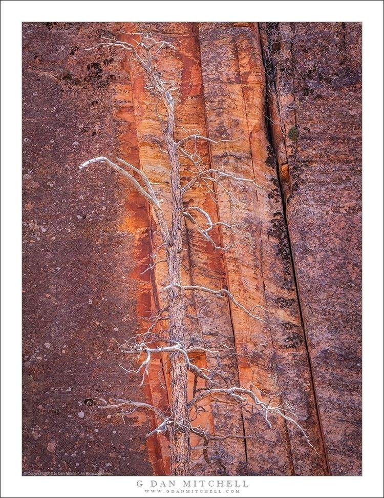 Snag, Red Rock. Copyright 2012  - gdanmitchell | ello