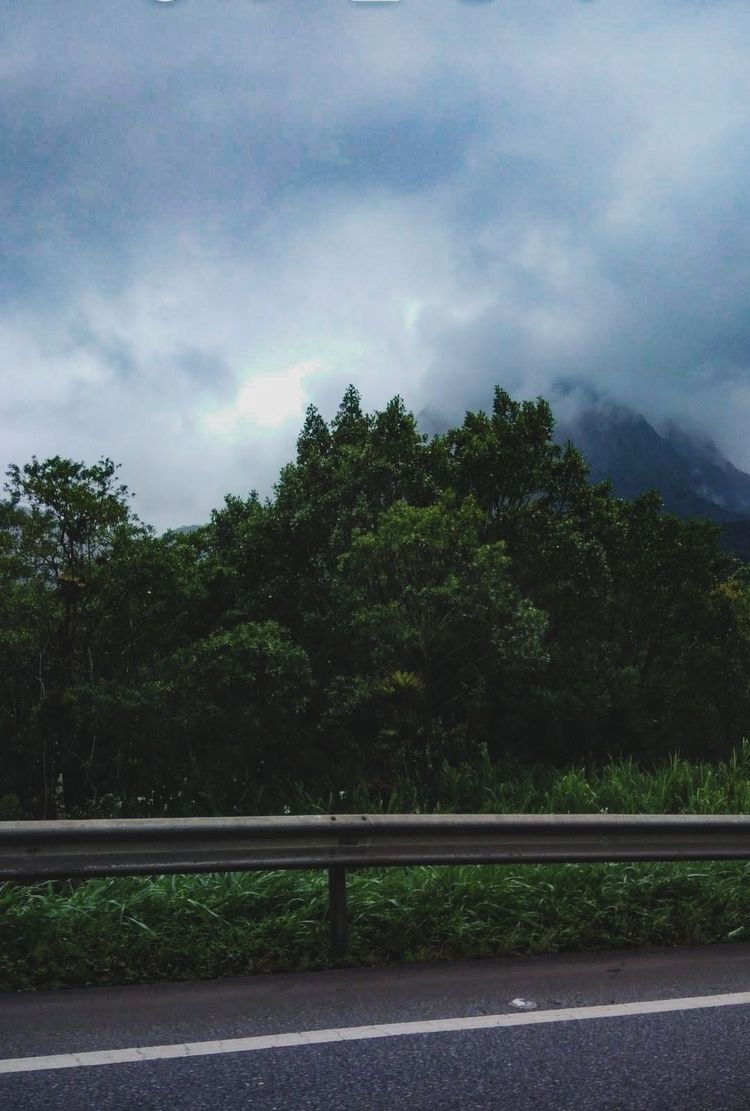 photography, landscape, trees - _erick_ | ello