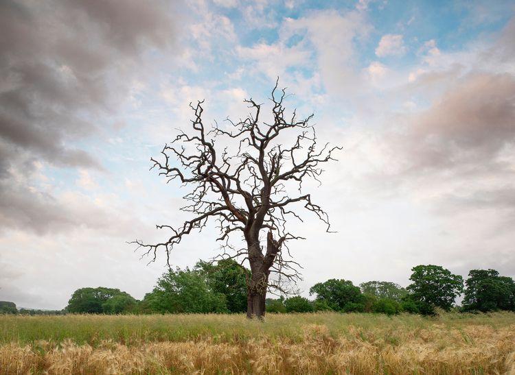 Dead tree, Berkshire, UK. Penta - forgottenheritage   ello