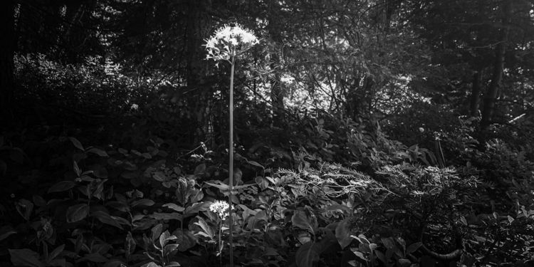Walking forest noticed organic  - hjcross_poetry | ello