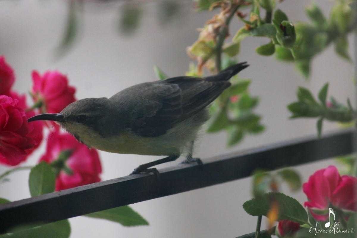 Window birding 2: Olive backed  - apps11 | ello