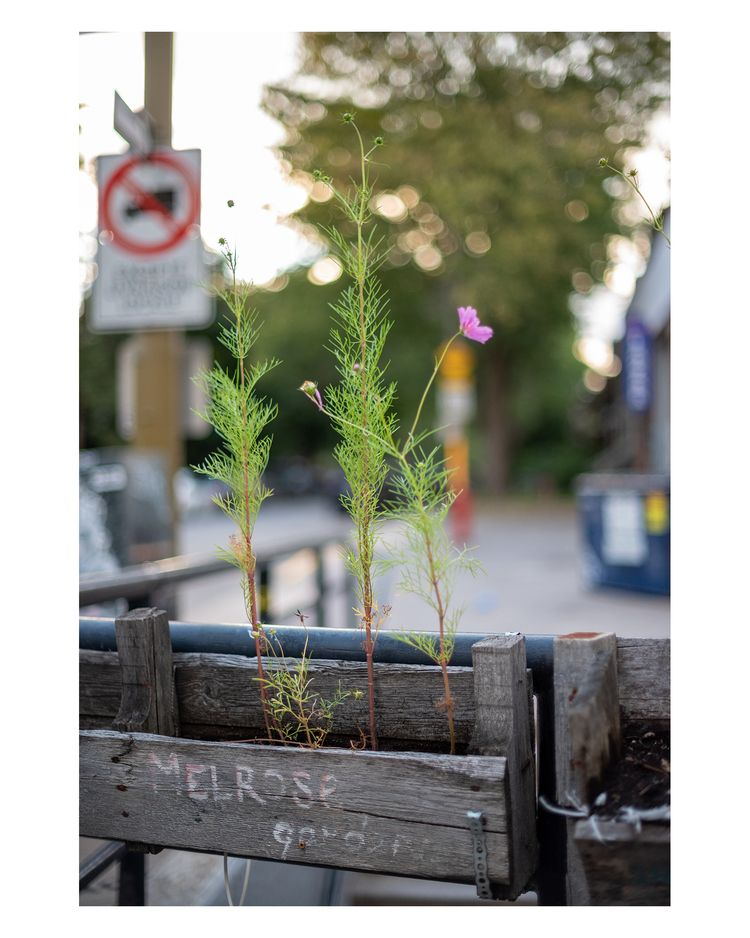 Neighbourhood city garden, NDG - mark_shaar | ello