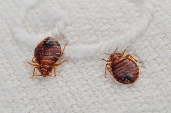 Bed Bug Treatment Cleveland Bug - loadwilliam0   ello