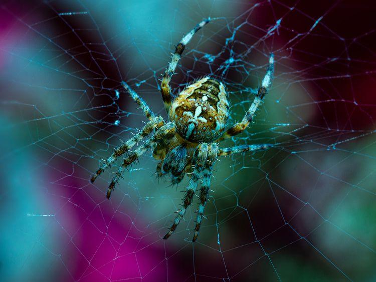 Spider, Garden, Panasonic, G80 - joenebula2 | ello