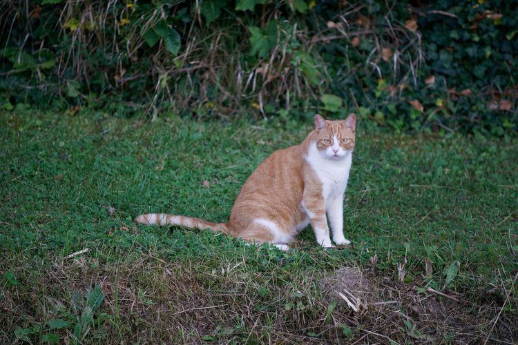 Fall cat - photography, catcontent - marcushammerschmitt | ello