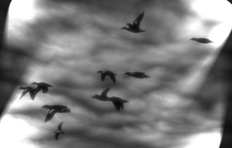 Birds - hnsen | ello