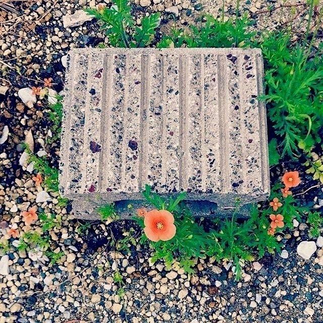 flowers 🧡:shamrock:️🧡:shamrock - mamimumemami | ello