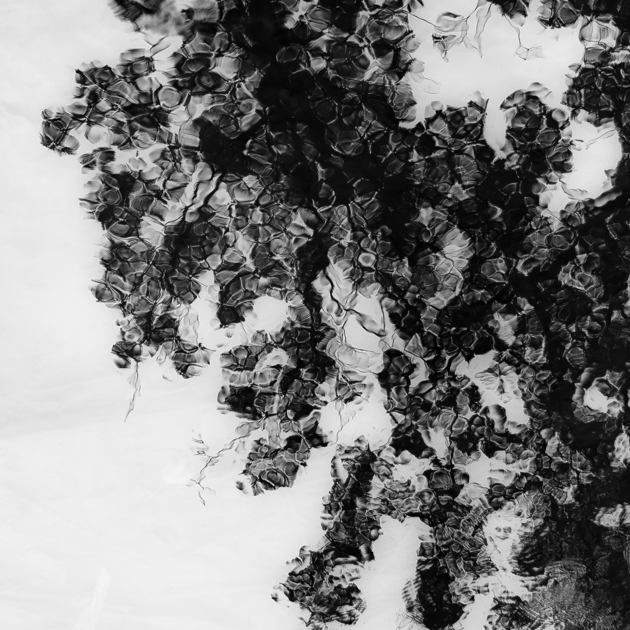 Trees Water 170 - noahbw | ello