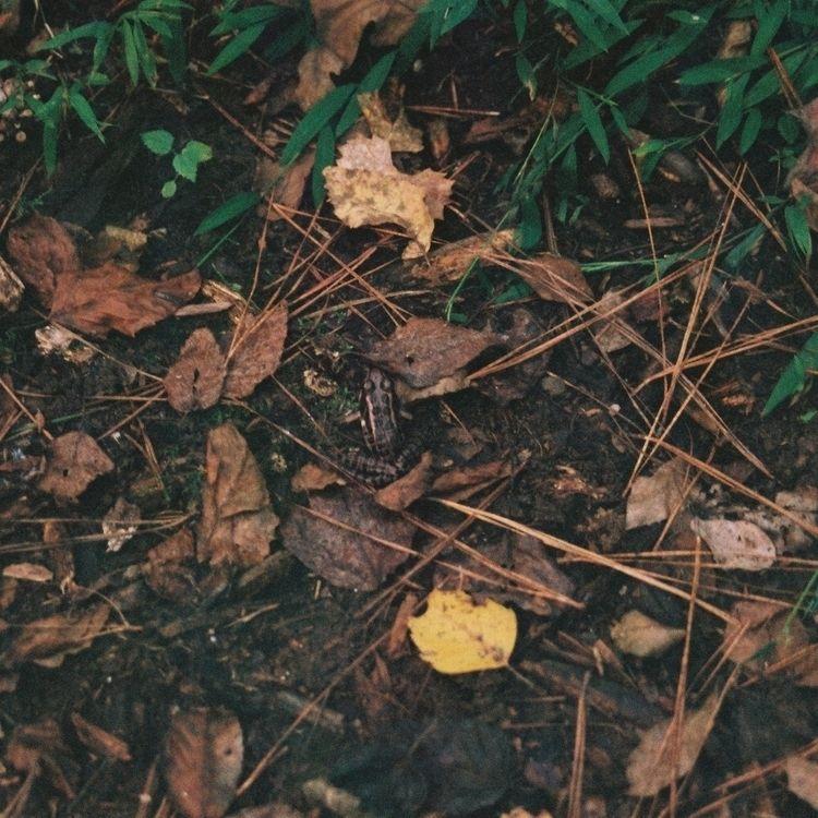 shot walking woods - k1000, Fujifilm - underflow | ello