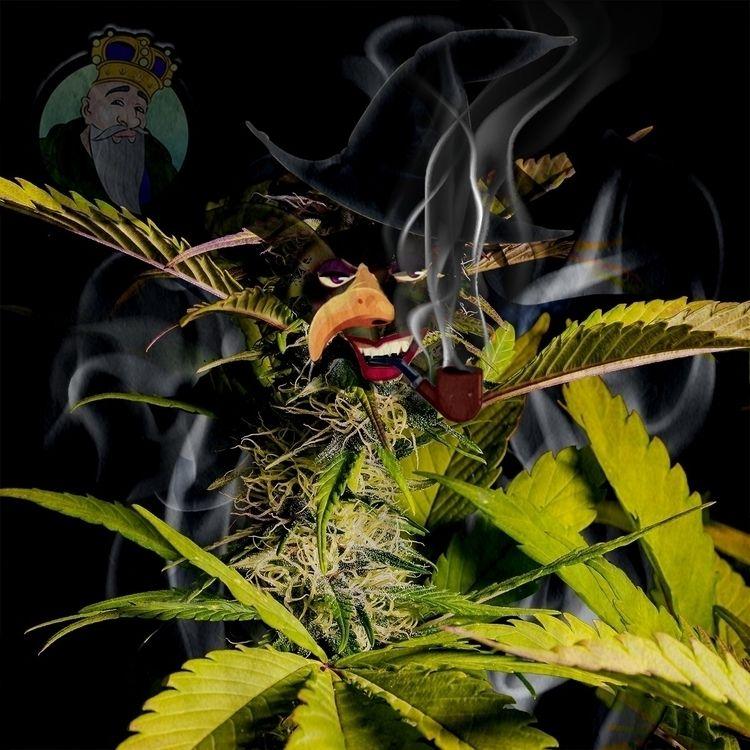 Super Silver Haze - cropkingseeds | ello