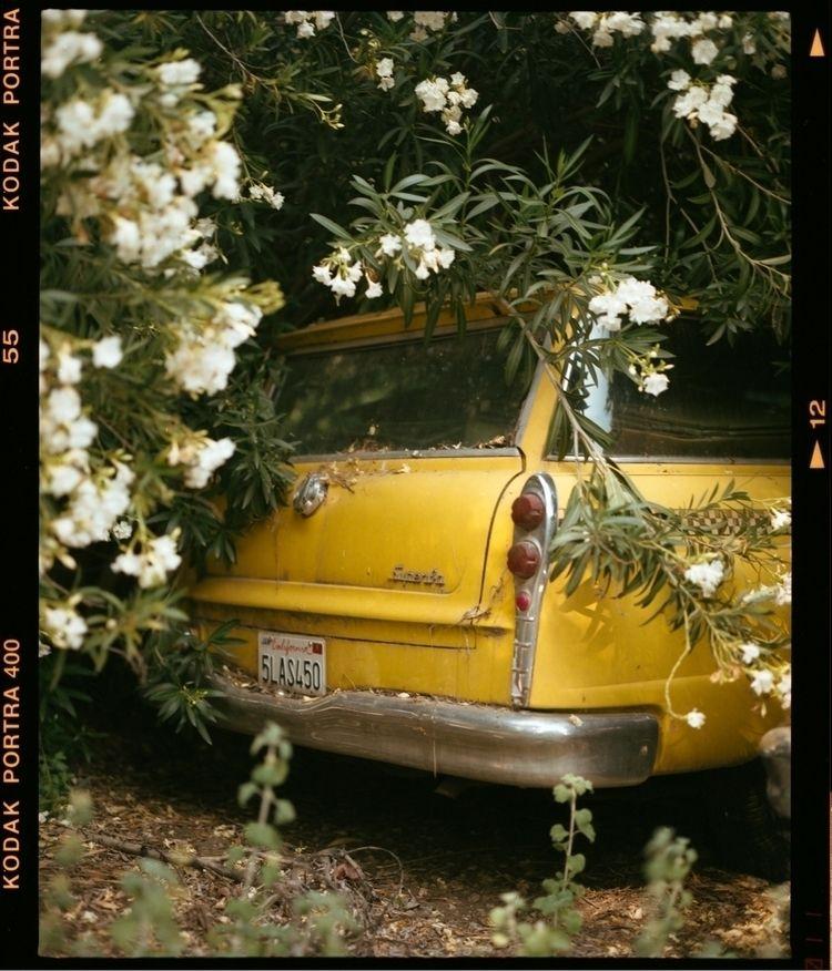 2019, shot Portra 400 - film, filmphotography - killthecity   ello