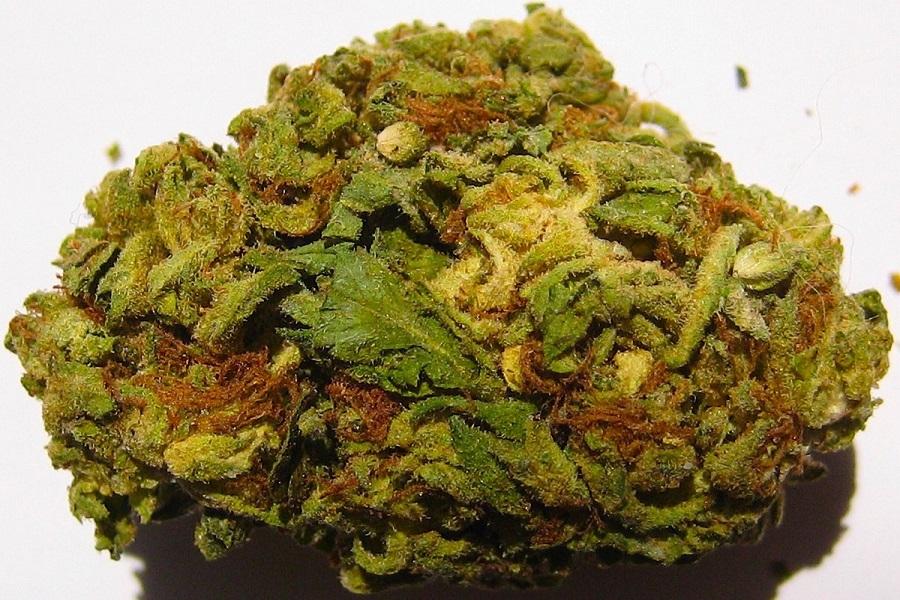 buy weed online Canada? approva - rosemarie01 | ello