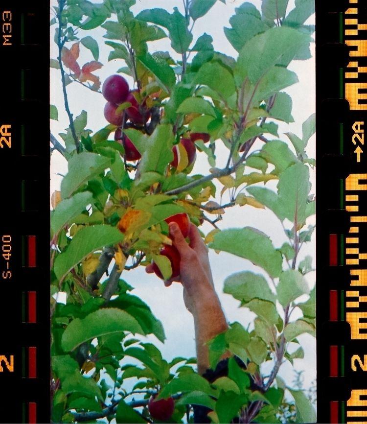 Gardens - 35mm, fujisuperia400 - icvrus   ello