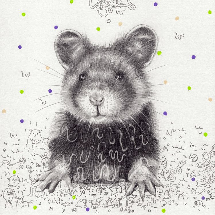 European hamster – internationa - heikomuller | ello
