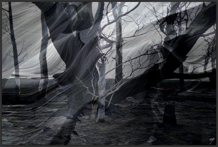 nature, fractured, 5 / californ - voiceofsf | ello