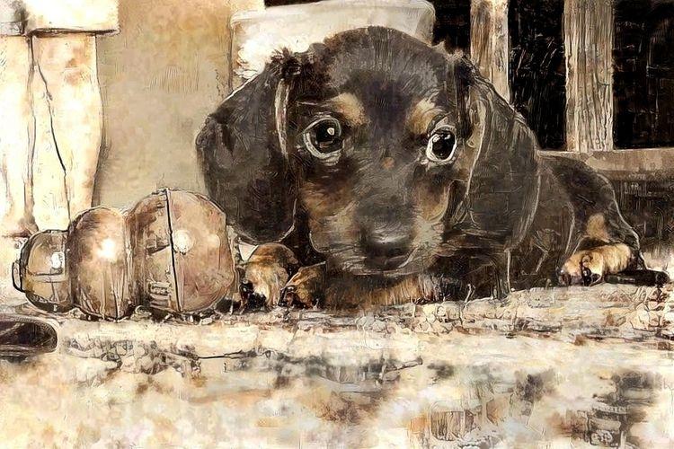 Young Abby - photography, dog, puppy - kenlong | ello