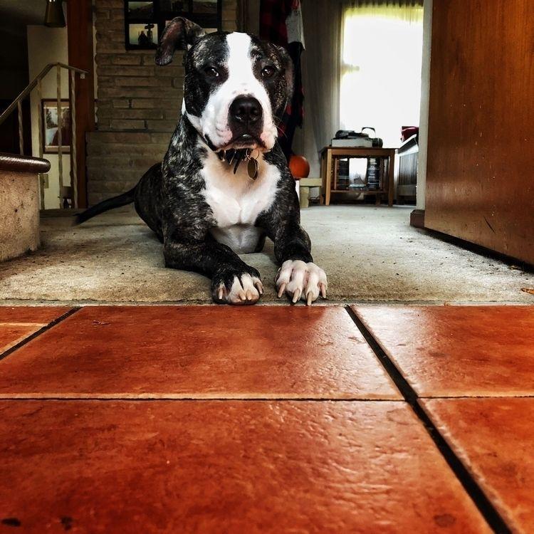 kitchen helper, Comrade Jo Dogs - interrailing   ello