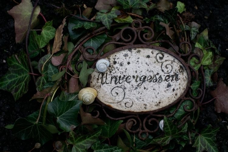 variant, lens - photography, cemetery - marcushammerschmitt   ello
