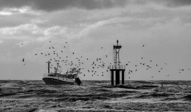Fishing boat birds - sea, water - marcelmuecke   ello