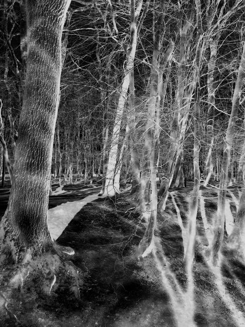 Grayverland. realm shadows - fantasy - igenvoicov | ello