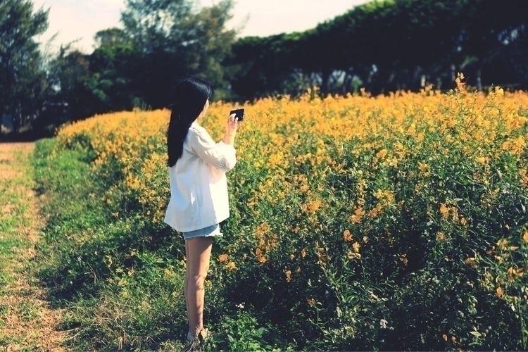 Sun hemp - longhair, longleg, flower - allen0319   ello