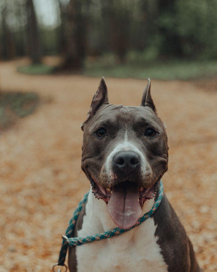 Mighty trio 🖤 - dogs, pets, photo - 161reasons | ello