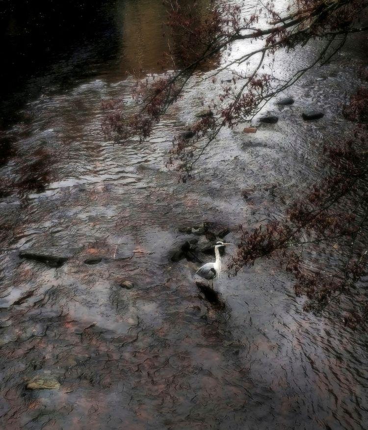 heron, river, winter - tevere | ello