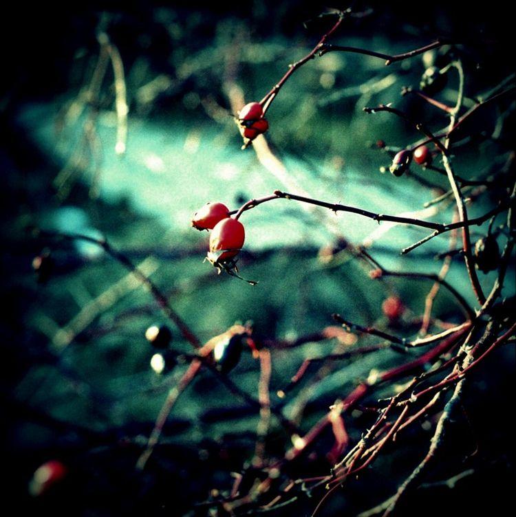 Night Magic Wolves November 30t - avakelly | ello